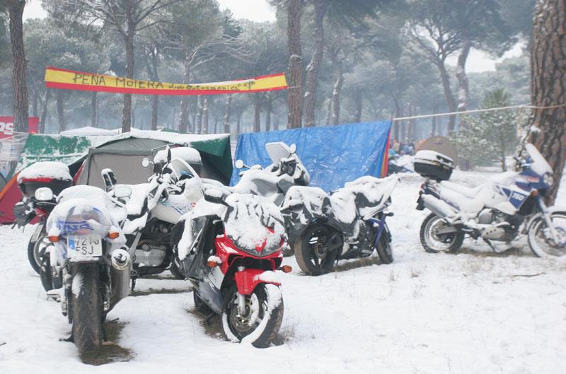 Encuesta de la semana: concentración invernal PIngüinos