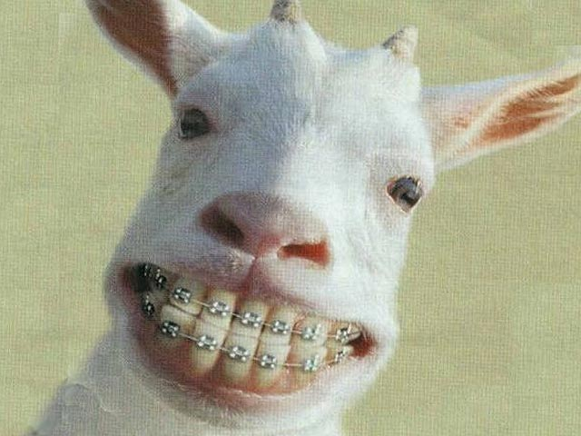 La cabra motorizada
