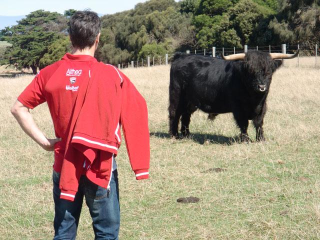 Carlos Checa coge el toro por los cuernos
