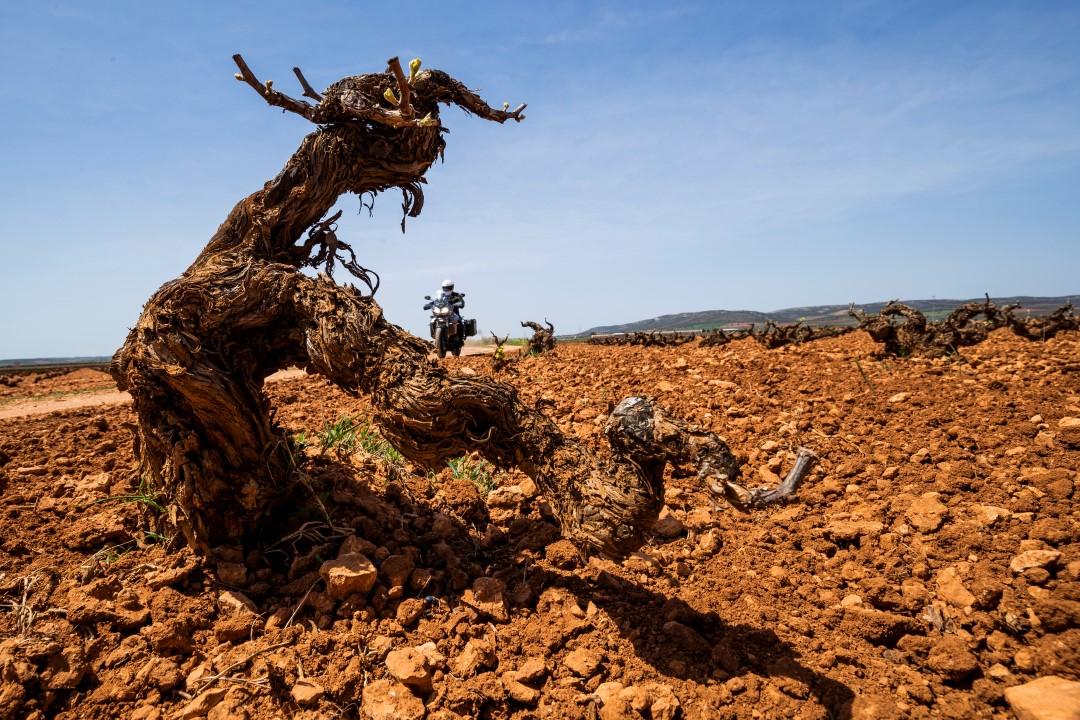 Ruta en moto por los viñedos manchegos con Ruralka