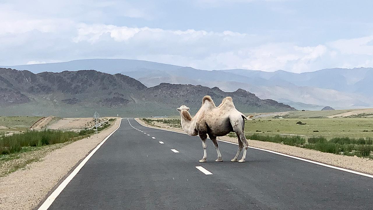 Mongolia ida y vuelta