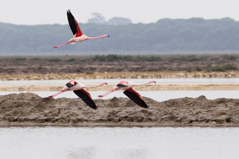 Turismo: Ruta en moto por el río Guadalquivir. Fotos